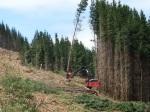 clear.cut.logging-R